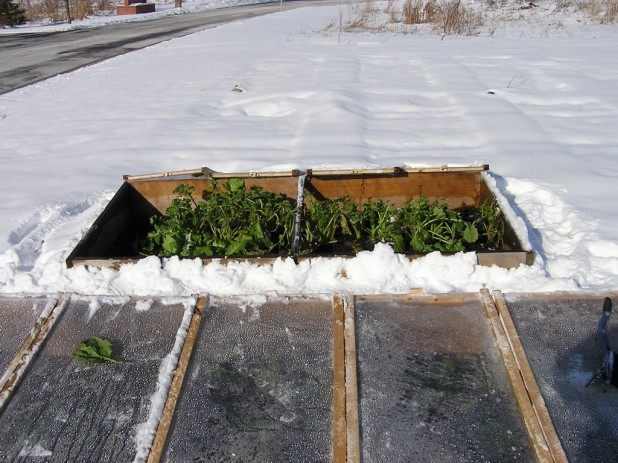 233_Two-Coldframes-618x463