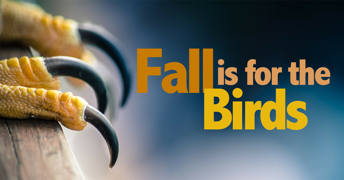 Fall is for the Birds